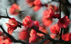 Natural Beauty wallpaper by rakshitashetty Flower Background Wallpaper, Tree Wallpaper, Flower Backgrounds, Wallpaper Backgrounds, Flower Branch, Blossom Flower, Types Of Flowers, Red Flowers, 1920x1200 Wallpaper