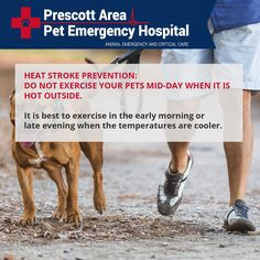 Heat stroke prevention: do not exercise your pets mid-day when it is hot outside. It is best to exercise in the early morning or late evening when the temperatures are cooler. #heatstroke #petemergency