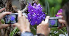 Las orquídeas exhiben su belleza en el Botànic | Comunidad Valenciana | EL PAÍS