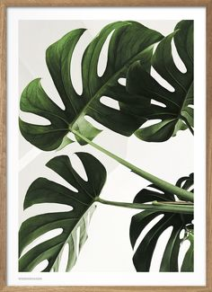 Plant Images, Plant Pictures, Wall Pictures, Background Pictures, Nature Pictures, Baby Poster, Vase Transparent, Green Pictures, Plant Wallpaper