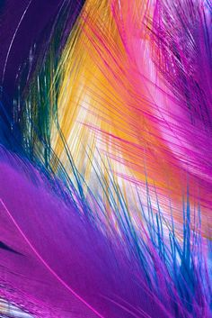Rainbow  Colors - Feathers