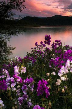 I Love Pictures,Enjoy My Beautiful World. Beautiful World, Beautiful Images, Beautiful Flowers, Beautiful Scenery, Landscape Photography, Nature Photography, Hiking Photography, Nature Pictures, Belle Photo