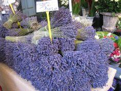 Bundles of lavender for sale at a provencal market. / Bouquets de lavande à vendre sur un marché de Provence. / France.
