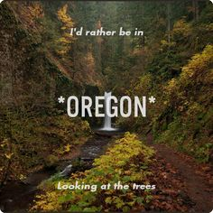 I'd rather be in Oregon looking at the trees...oh wait, that's exactly what I'm doing.