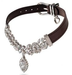 The Most Expensive Dog Collar..just tell me why? because its Miss Lily's y'all thats why!
