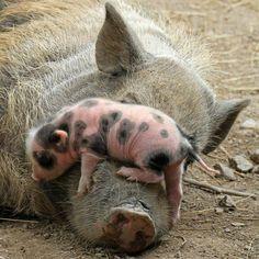 mom,wake up!