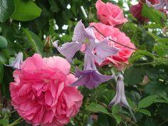Traumpaare im Beet gesucht - Seite 4 - Gartengestaltung - Mein schöner Garten online