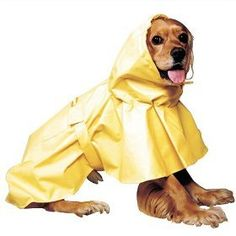 $8.99-$10.99 Attach your leash to your dog's collar through the small slit at the neck and be the talk of the walk in this soft and supple poly-vinyl Puddle Raincoat! This yellow slicker sheds water and will keep your pet as dry as the proverbial bone. It features elastic around the comfort fit collar and an elastic band to loop under the tail. Velcro straps hold the Puddles Raincoat in place on  ...
