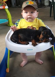 odd place to lounge #cute #doxie