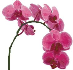 Pink Orchids  Counted Cross Stitch Pattern by WooHooCrossStitch, $9.00