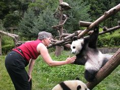 We worked with Wolong Panda Reserve from 2001 to 2006 as planners, an honor and chance to meet baby pandas.