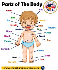 Parts of The Body in English, Parts of Human Body - English Grammar Here - Vocabulary in English - wattpad English Grammar For Kids, Learning English For Kids, English Lessons For Kids, English Vocabulary Words, Learn English Words, Teaching English, Vocabulary List, Body Parts For Kids, Body Parts Preschool