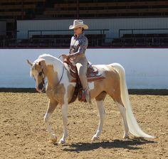 Here is your dream horse! Xtreme Delite (Xtreme to the Max X HZ Dixieland Delite) 2008 Half Arabian Palomino Tobiano Pinto Mare 15h. Regional champion and for sale! Please contact Jennifer Diamond
