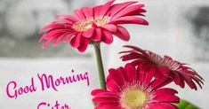 Looking for Good Morning Wishes for Sister? Start your day by sending these beautiful Images, Pictures, Quotes, Messages and Greetings to your Sis with Love. Good Morning Sister Images, Good Morning Gif, Good Morning Greetings, Morning Pictures, Good Morning Wishes, Prayers For Sister, Wishes For Sister, Morning Sayings, Good Morning Quotes