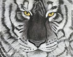 About the charcoal technic - white tiger drawing with charcoal - Art365