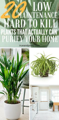 Beginner plants you can't kill. 20 Low Maintenance Hard To Kill Plants That Actually Can Purify Your Home.
