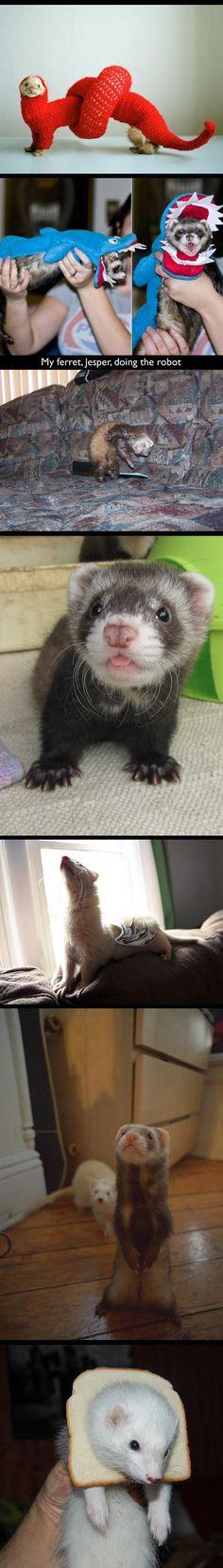 Funny Ferrets | funny-ferrets-costume-cute-bread