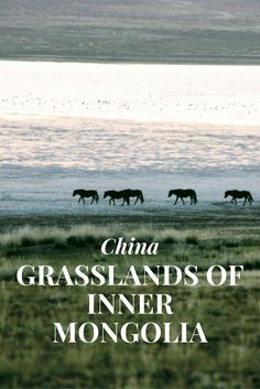 Inner Mongolia and the Grasslands - China - Only Once Today