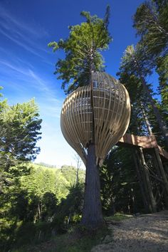 tree-house restaurant in New Zealand, super cool.