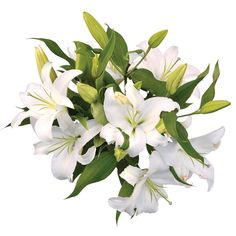Oriental Lily - White - 25 Stems -$74 Sam's Club has other flowers