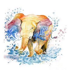 Baby Elephant Watercolor Framed Art Print by Melly Terpening - Vector Black - Watercolor Art Landscape, Watercolor Art Diy, Watercolor Art Lessons, Watercolor Art Paintings, Cool Paintings, Beautiful Paintings, Elephant Watercolor, Watercolour, Elephant Illustration