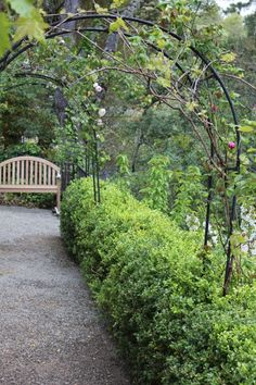 Pathway leading to a wooden bench.