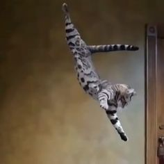 Adventure cat - Kittens, cats and Big cats too. Funny Cute Cats, Cute Funny Animals, Cute Baby Animals, Cool Cats, Animals And Pets, Silly Cats, Big Cats, Cute Animal Videos, Funny Animal Pictures