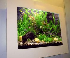 In-wall and wall-mounted fish tanks make great use of space. They can transform dull rooms with light and movement. Tropical Freshwater Fish, Tropical Fish Aquarium, Freshwater Aquarium, Fish Aquariums, Wall Aquarium, Home Aquarium, Planted Aquarium, Fish Tank Wall, Fish Tanks