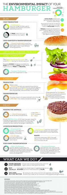 The Environmental Impact Of Your Hamburger [Infographic]