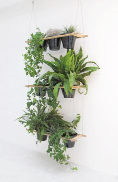 Viherkasveja // Plants - DESIGNED BY // sm - paras jutusta saatava vinkki on tämä amppelisysteemi