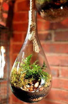 Tiny hanging terrarium
