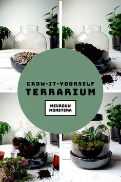 Maak je eigen Grow-it-yourself terrarium! In deze blog leg ik je uitgebreid en stap voor stap uit hoe je zelf zo'n hippe terrarium maakt! Ook jij kan dat! #terrarium #ecosysteem #minituin #plantstyling #planten #plants #mevrouwmonstera #diy #stapvoorstapuitleg Terrarium, Plants, Blog, Diy, Terrariums, Bricolage, Blogging, Plant, Handyman Projects