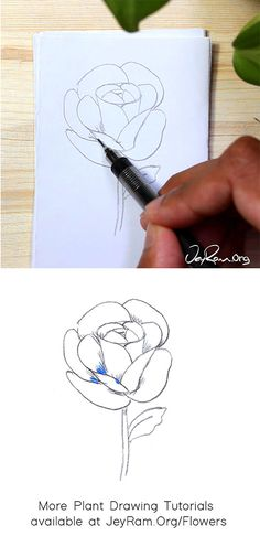 How to Draw a Rose : Step by Step for Beginners — JeyRam : Art Roses Drawing Tutorial, Flower Drawing Tutorials, Rose Tutorial, Leaf Drawing, Floral Drawing, Plant Drawing, Beginner Drawing, Drawing For Beginners, Rose Step By Step