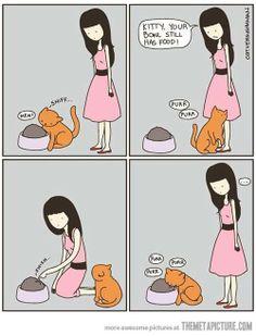 Gatto: riesce a captare il movimento di un insetto dall'altra parte del giardino... Gli devi indicare il cibo che ha davanti se no non se ne accorge. LOL