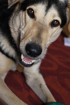 Angus the Hunter Valley farm dog