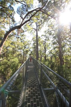 The Treetop Walkway at the Valley of the Giants, Walpole Wilderness Discovery Centre, Walpole, Western Australia is CHILD FRIENDLY. Walk amongst the Giant Trees of the South Coast.
