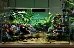 A charming Chinese aquarium and terrarium shop, Ningbo - Chihiro Water, with nice aquaria and absolutely stunning paludaria.