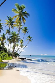 Science Discover The beach on the coast of Trinidad. Beautiful Beach Pictures, Beach Photos, Beautiful Beaches, Big Island Hawaii, Island Beach, Small Island, Beach Photography, Nature Photography, Famous Places In France