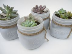 Large Succulent in White Painted Mason Jar by StellaDesignsShop