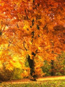 Gallery Direct Fine Art Prints: Tree Of Eden by Roman Solar Fall Pictures, Fall Photos, Nature Pictures, Pretty Pictures, Painting Prints, Fine Art Prints, Autumn Aesthetic, Autumn Photography, Fantastic Art