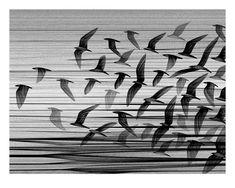 Kai And Sunny 'Migration South' PrintAvailable - PostersandPrints - An Urban Street Art Blog - The Best Art Blog About Limited Edition Screen Prints, Urban Art, Graffiti