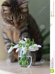 Bildergebnis für katze mit blume