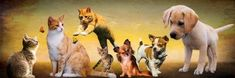 There have always been scams involving the sale of puppies and kittens but currently there are more, due to the social distancing rules that mean prospective buyers cannot visit to view the kittens or puppies and scammers are taking advantage of this. The scammers offer animals for sale and you pay a deposit, but the …