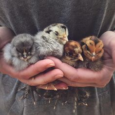 "1,781 Likes, 39 Comments - Farm + Bakery (@threelittleblackbirds) on Instagram: ""Handfuls of soft sweetness """
