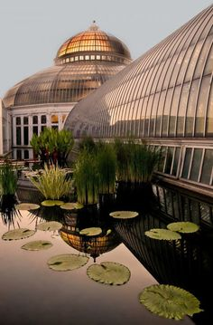 Como Conservatory, Saint Paul- I was just there and the zoo is awesome