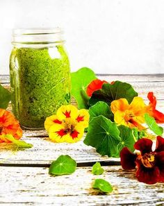 Are you growing edible flowers? This nasturtium pesto is a perfect pasta sauce, sandwich spread, or vegetable dip. Edible Plants, Edible Garden, Edible Flowers, Pesto, Vegetable Dips, Sandwich Spread, House Plant Care, Flower Food, Wild Edibles