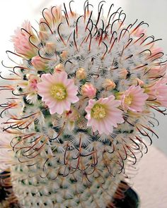 "on LinkedIn: ""Cactus . Plants, Rare Flowers, Unusual Flowers, Amazing Flowers, Beautiful Flowers, Cacti And Succulents, Trees To Plant, Blooming Cactus, Desert Plants"