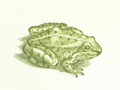 Frog No.2 ...