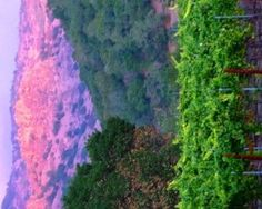 Summer sunset illuminates glorious Stag's Leap palisades along the east side of Napa Valley