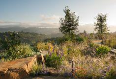 Spectacular views, bourndlers and wispy grasses - Reclamation of Native Oak Ridge, Design David Thorne LA, Oakland CA